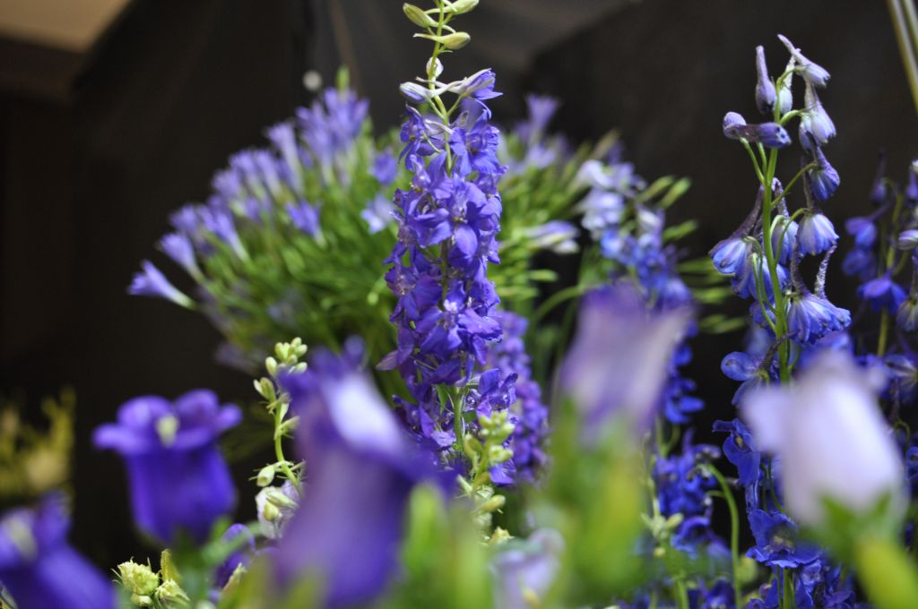 Kleurige bloemen in de bloemenwinkel Ad. Hosman