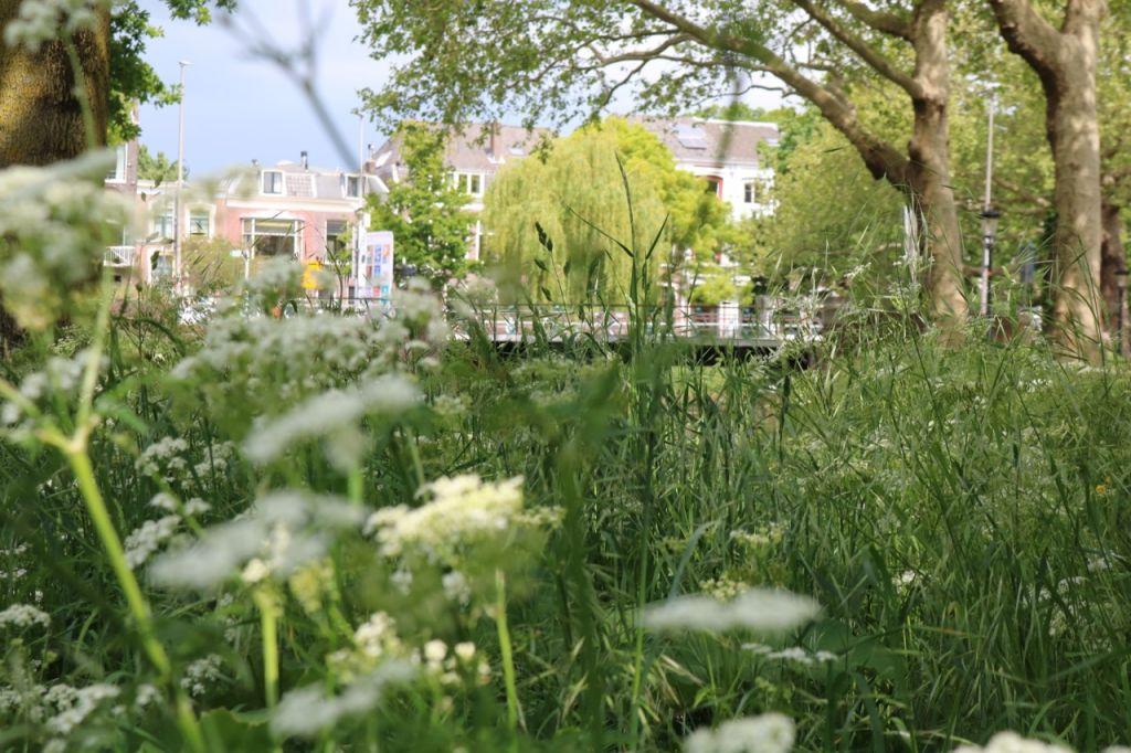 Home Mcu Voor Een Duurzame En Groene Stad