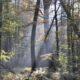 Bomen en lichtstralen zon in Amelisweerd